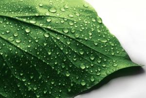 Real Herbalife Leaf in Philadelphia